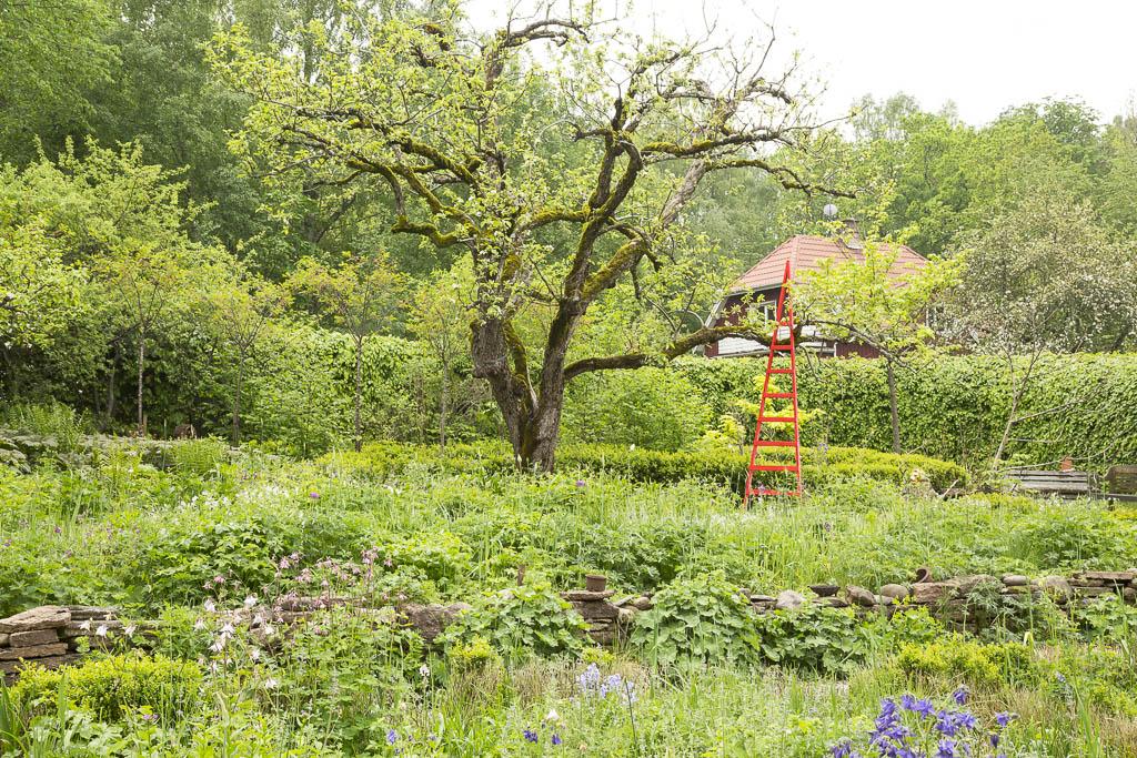 Kontrollerat kaos i Hannus trädgård | Foto: Michael Krantz
